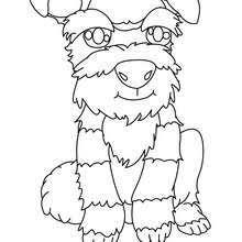 poodle coloring pages hellokids
