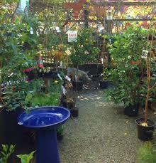 native plant nurseries melbourne fitzroy nursery melbourne