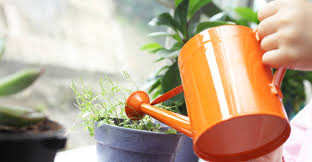 indoor herbs to grow the 16 best healthy edible plants to grow indoors greatist