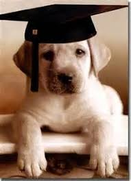 dog graduation cap and gown pleasurable graduation cap for dogs dog gown free clipart