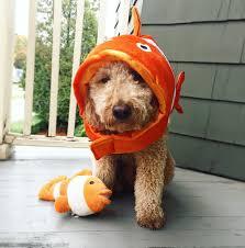 dog halloween costume dog halloween costume ideas u2013 you bet your pierogi