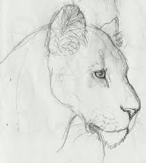 lioness sketch by richieisnela on deviantart i u0027m beginning to