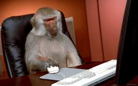 Baboon Meme - video monkey baboon memes take over twitter and it s hilarious bso