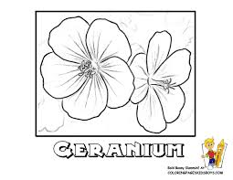 flower coloring page yescoloring free flowers usa world