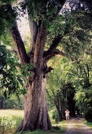internship virginia big trees