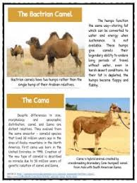 camel facts information u0026 worksheets for kids teaching resources