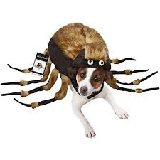 Funny Dog Costumes Halloween 13 Funny Dog Costumes Images Animals Costume