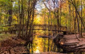 South Carolina national parks images Congaree national park hopkins south carolina sc jpg