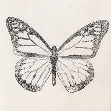 butterfly ink pointillism study canvas print canvas art by