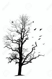 tree with crows stock photo picture and royalty free image image