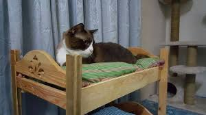 Cat Bunk Bed Large Cat Bunk Beds Simple Cat Bunk Beds With Diy Project