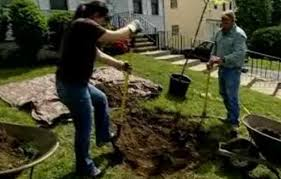 Backyard Soil How To Plant A Tree In Poor Soil This Old House