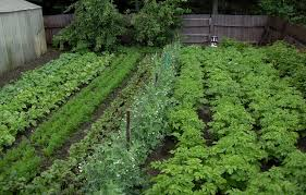 1000 ideas about backyard vegetable gardens on pinterest in