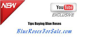 Blue Roses For Sale Bluerosesforsale Com Information About Blue Roses Online Youtube