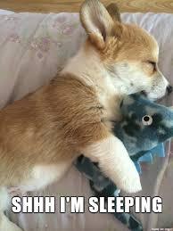 Sleepy Memes - sleepy corgi meme on imgur