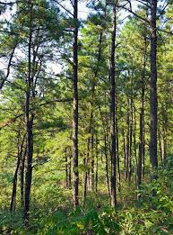 albany pine bush wikipedia