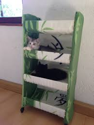 Maine Bunk Beds Maine Coon Fast Kitten Bunk Bed