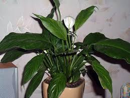 common house plants names best house plants pinterest common