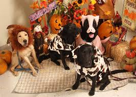 Halloween Costumes Dogs Cutest Puppy Costumes 2011 Dog Costume Puppy Training