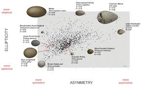 avian egg shape form function and evolution science