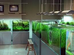 Aquascape Designs Products 173 Best Aquascape Images On Pinterest Aquarium Design Aquarium