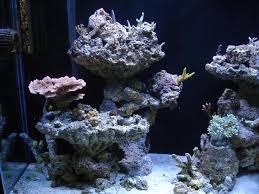 Aquascaping A Reef Tank Aquascaping Hobby Aquatics Pinterest Aquascaping Aquariums