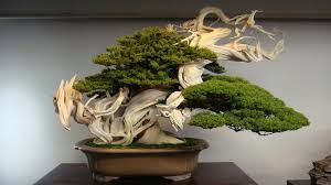 awesome world oldest bonsai tree 37 about remodel with world