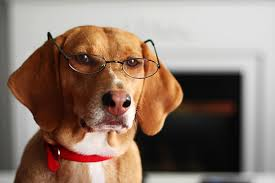 What Causes Dogs To Go Blind What To Do If Your Dog U0027s Eye Pops Out Of The Socket It Happens