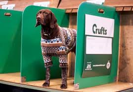 boxer dog crufts 2015 how to win crufts 2017 here u0027s 23 things you need to know for