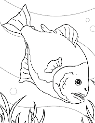 saltwater fish coloring pages u2013 corresponsables