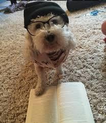 pets u2013 2 u2013 stuff dog taught