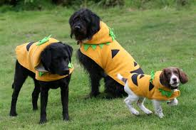 Pet Cat Halloween Costumes Ideas For Halloween For Pets Canine U0026 Co