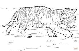 ausmalbild tiger baby ausmalbilder kostenlos zum ausdrucken
