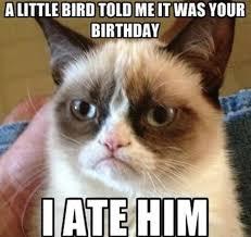 Good Meme Grumpy Cat - grumpy cat 15 surly facts about the internet s grumpiest cat
