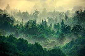 foggy treetops photograph by dan carmichael