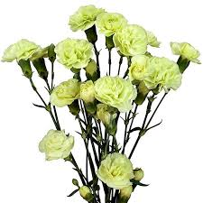 wholesale carnations mini carnations green wholesale carnations theflowerexchange