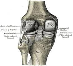 Back Knee Anatomy Iii Syndesmology 7b The Knee Joint Gray Henry 1918 Anatomy