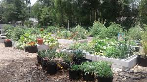 Vegetable Gardens In Florida by Community Garden First Presbyterian Church Of Deland