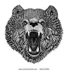 bear face stock images royalty free images u0026 vectors shutterstock