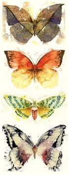 moth picmia