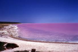 texelse vogelplas kleurt prachtig flamingo roze foto ad nl