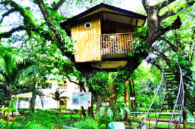 file tree house jpg file zamboanga city treehouse jpg wikimedia commons