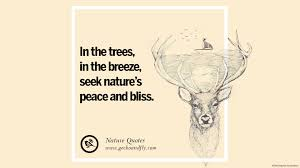 32 beautiful quotes about saving mother nature and earth home
