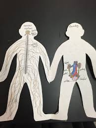 human body systems paper dolls nervous and excretory cool