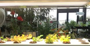 getting fresher greens this winter u2014 indoor gardening is easier