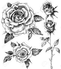 coloring pages gorgeous drawn rose 58986931 flowers set hand