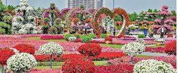 miracle garden world u0027s biggest flower garden