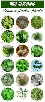 herb chart herb identification identifying fresh herbs the gardening cook