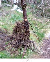 eartheasy blog10 carbon storing trees and how to plant them