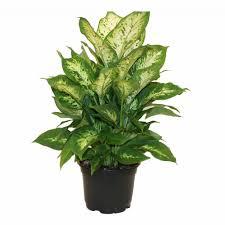 live indoor plants live house plants new in excellent best indoor photos interior